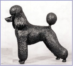 Poodle- Kennel