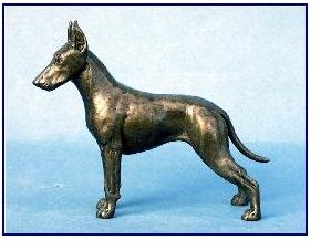Manchester Standard Terrier Dog - Small Standing