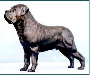 Mastiff Dog - Large Standing