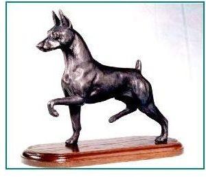 Miniature Pinscher Dog - Moving