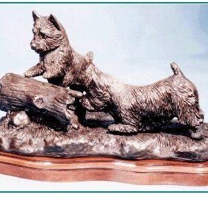 Norwich Terrier - Curiosity