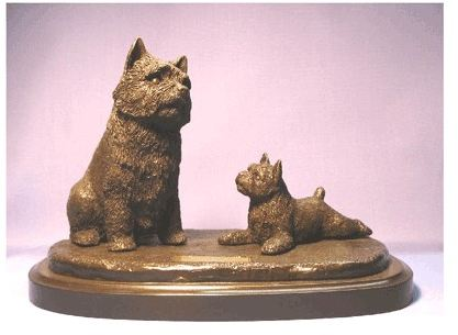 Norwich Terrier - The Look Of Love