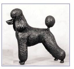 Poodle- Kennel - Small Standing