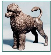 Portuguese WaterDog - Small Standing Wavy Coat