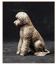 Portuguese WaterDog - Small Sitting