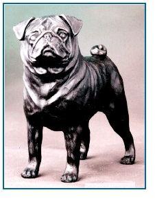 Pug - Large Standing Dog