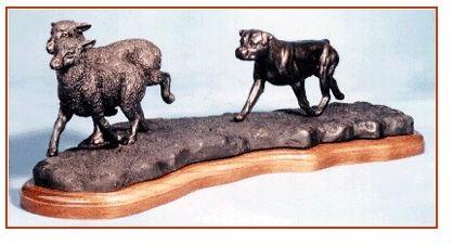 Rottweiler - Herding Sheep