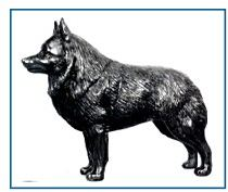 Schipperke - Small Standing dog