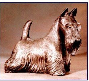 Scottish Terrier - Large Scottie Standing