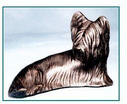 Skye Terrier - Curled Sitting