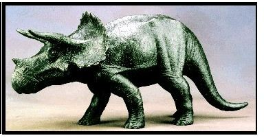 Limited Edition - Triceratops
