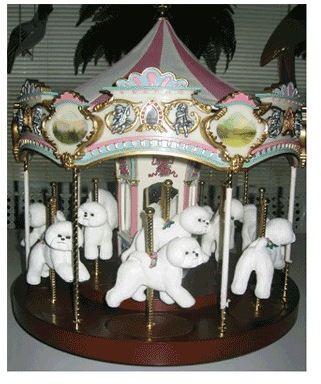 Bichon- Carousel