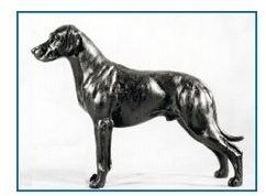 Rhodesian Ridgeback - Small Standing Dog