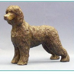 Irish Water Spaniel - Standing Dog