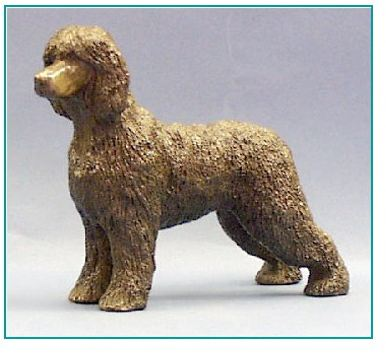 Irish Water Spaniel - Standing Dog
