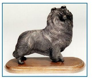Shetland Sheepdog - Standing Sheltie