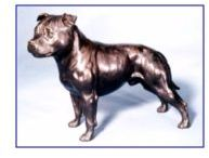 Staffordshire Bull Terr - Large Standing Dog