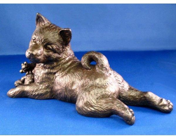 Norwegian Elkhound - Large Lying Puppy
