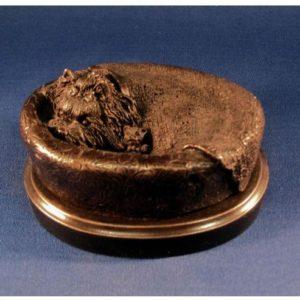 Yorkshire Terrier - Bed Bug
