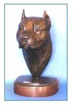 Am. Staffordshire Terrier - Large Headstudy