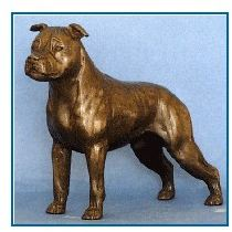 Am.Staffordshire Terrier-Sm. Stand-natural ears