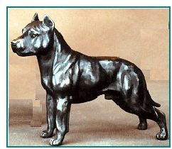 Am. Staffordshire Terrier - Small Standing Dog