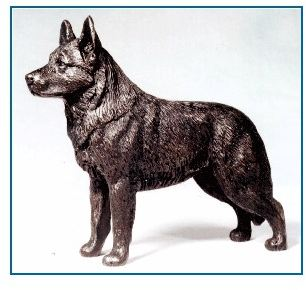 Australian Cattle Dog - Small Standing Dog