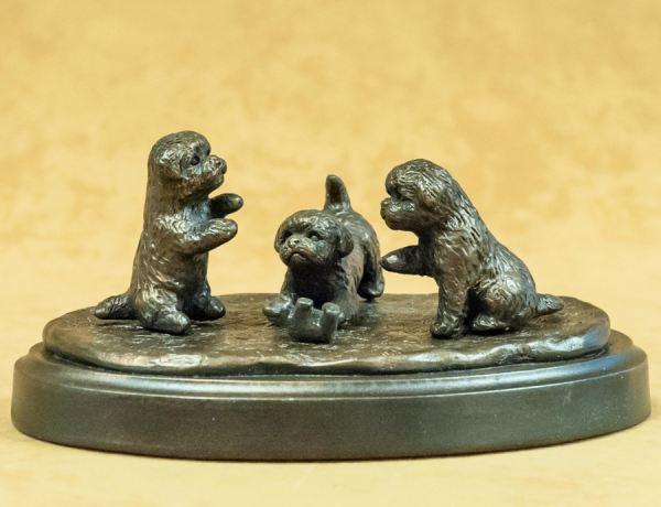 Bichon- Three puppies playing