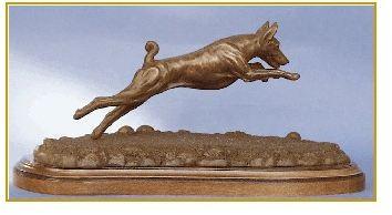 Basenji - Coursing