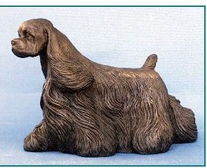 American Cocker Spaniel - Medium Large Moving