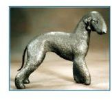 Bedlington Terrier -Large Standing Dog