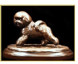 Bichon -Small Moving Dog