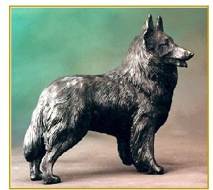 Belgian Sheepdog/Tervuren - Large Standing Dog