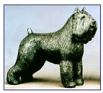 Bouvier Des Flandres - Large Standing Dog