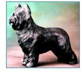 Briard - Large Standing Dog