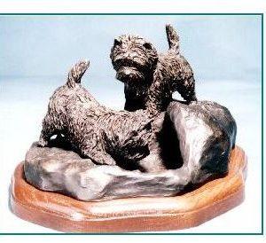 Cairn Terrier - Curiosity