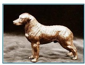 Chesapeake Bay Retriever - Small Standing Dog