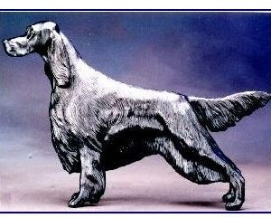 English Setter - Large Standing Dog