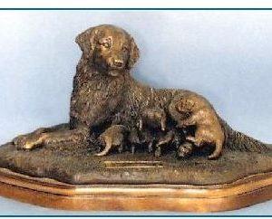 Golden Retriever Dog - Golden Prospects