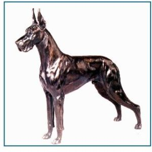Great Dane Dog - Extra Large Male Standing