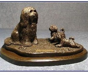 Havanese Dog - Pride and Joy