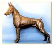 Doberman -Large Standing Dog